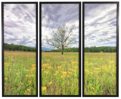 Spring Comes to Cades Cove Tryptych