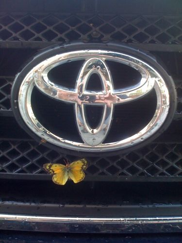 Butterfly stuck to grille of truck