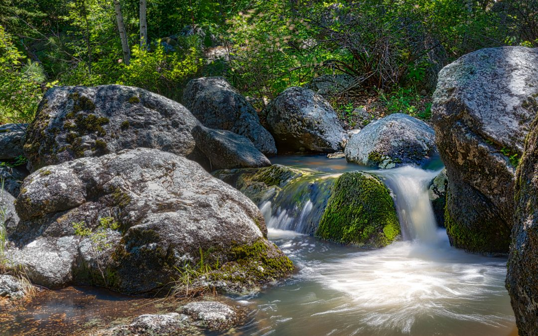 Grizzly Bear Creek — Hidden Waterfall Hike